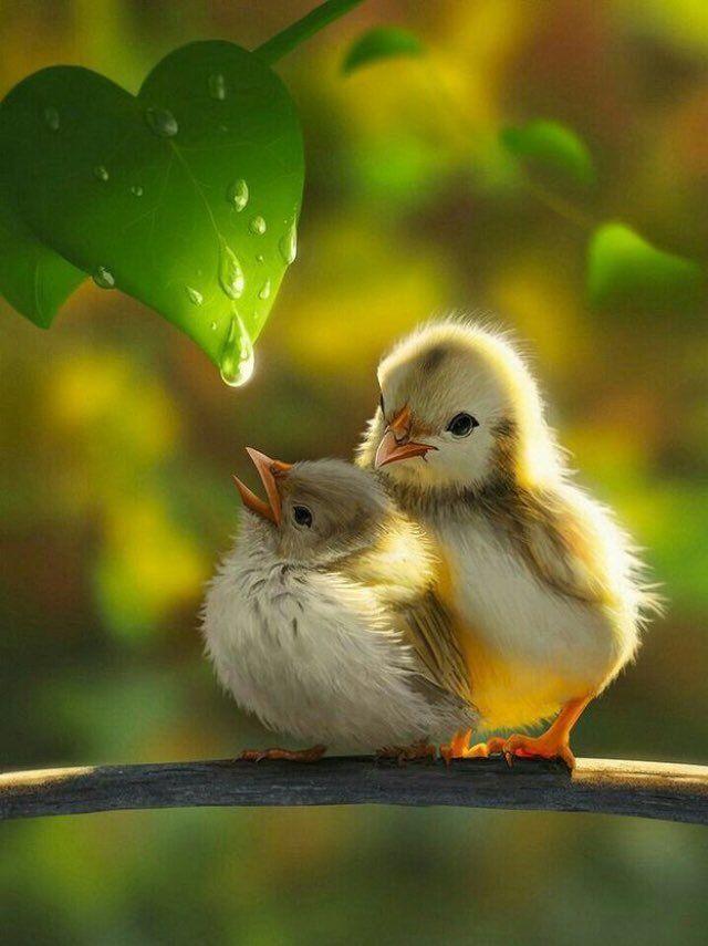Доброе утро с птицами веселые картинки, картинки про