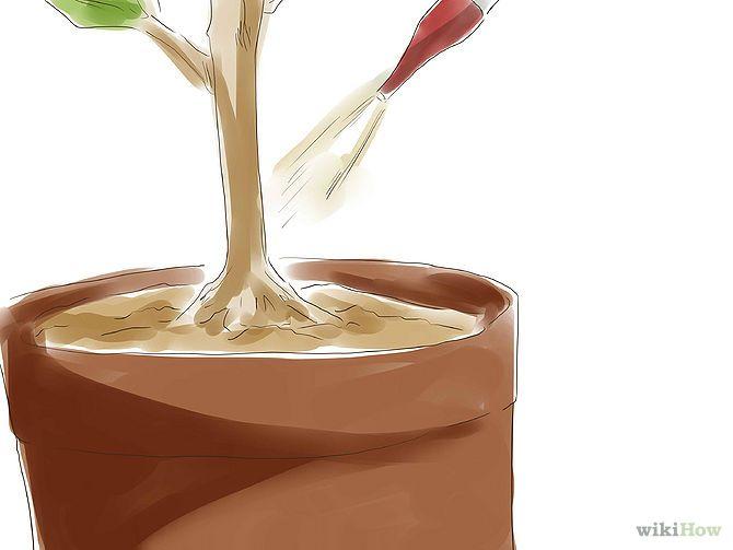 Pelitre 2  O bien, haz una solución de 10 gramos (0,35 oz) de piretrina aplastada en 3 cuartos de galón (2,84 litros) de agua tibia. Deja que la solución repose durante 3 horas. Para aumentar la potencia, añade 1 cucharadita (5 ml) de aceite de semillas de sésamo o de detergente líquido para platos.