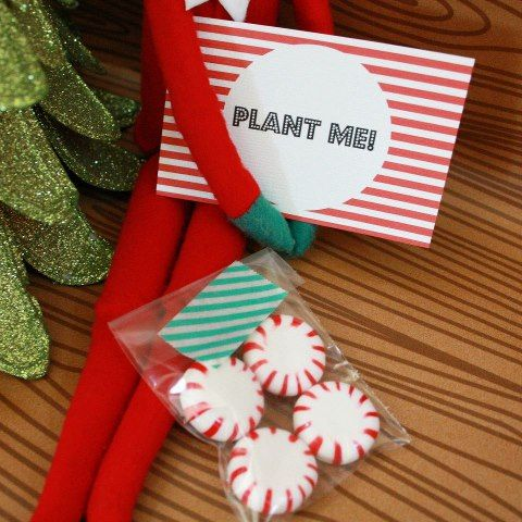 Elf on the Shelf idea,( next morning they'll see candy canes)
