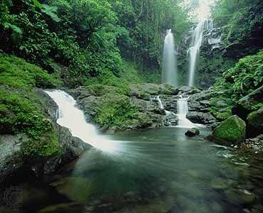 Rainforest in Costa Rica!