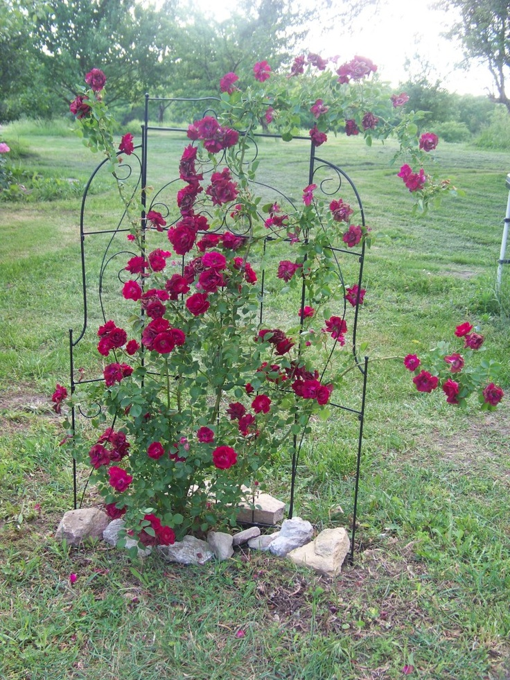 1000 images about rose trellis on pinterest rose for Rose garden designs for small yard