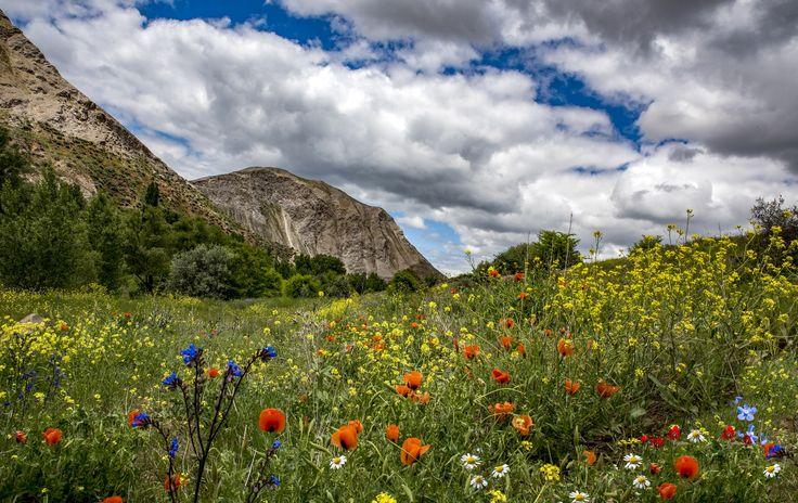 taşlıdere - spring