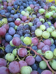 Catawba grape vine is a cold tolerant variety hardy to USDA zone 4, and a good choice for short season regions.  The Catawba grape is medium sized, round, purplish red with distinctive flavor that is rich and sweet.  The grapes on this variety ripen late season after Concord.  You can enjoy the fruit for wine, fresh eating or juice.  The Catawba will also delight you with bold textured deep green foliage which turns bright yellow in the autumn, giving way to dominant trunks and branches…