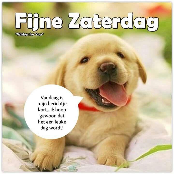 Fijne zaterdag. ( Wishes for you )   Hondjes - Dogs ...