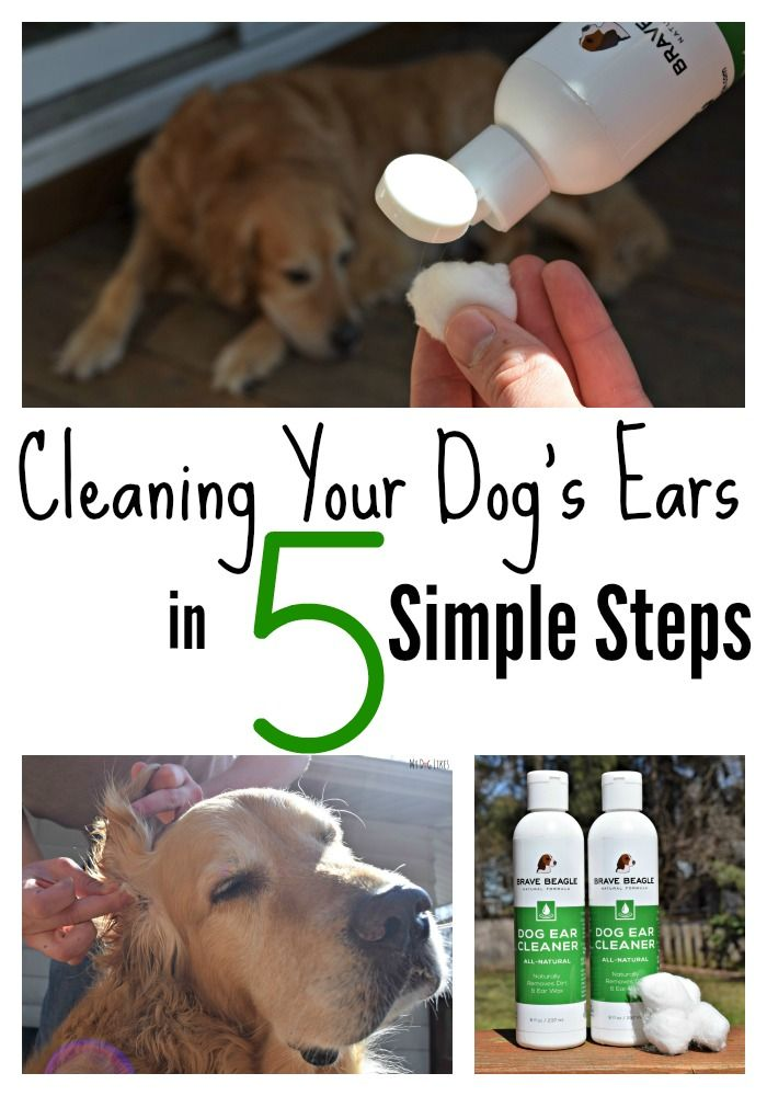 "Cleaning your dog's ears is a great way to keep allergy related ear infections at bay. Read @MyDogLikes ' 5 simple steps for cleaning your dog's ears with an all natural, made in the USA ear cleaner from @bravebeagle ! Save 20% with code ""HARLEY16"" expires 12/31/15."