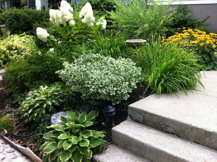 20 best images about front yard gardens on pinterest for Easy care shrubs front house