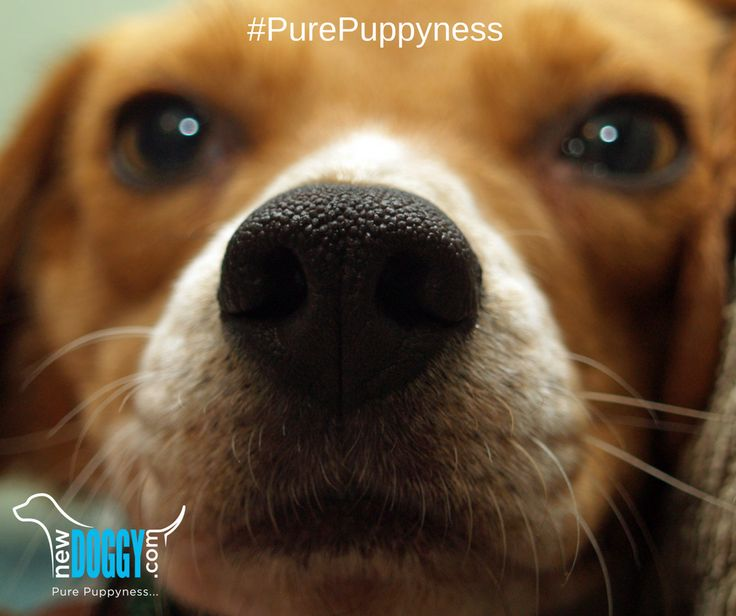 #PurePuppyness