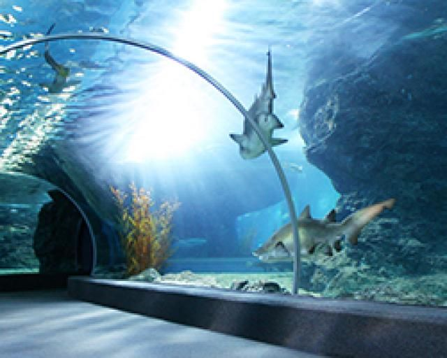 Ripley's Aquarium of Canada in Toronto is home to 15,000 animals, including sharks, jellies, rays, and green sea turtles.