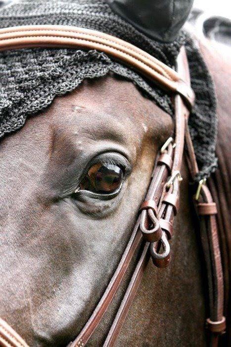 Soulful horse eye