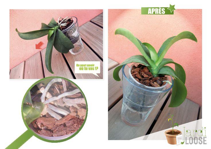Les 25 meilleures id es concernant rempotage orchid e sur pinterest hoya plante rempoter une - Orchidee entretien apres floraison ...