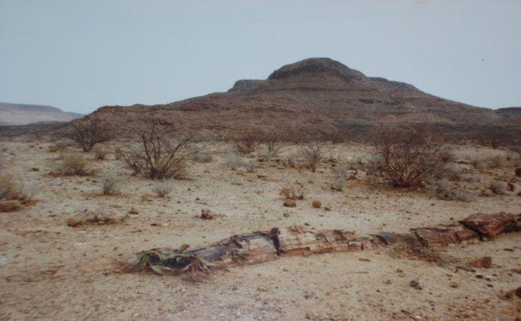#Travel: #Namibia ~ Petrified Forest, #Damaraland, Namibia. The Petrified Forest is a national monument.   Photo credit: D Rudman