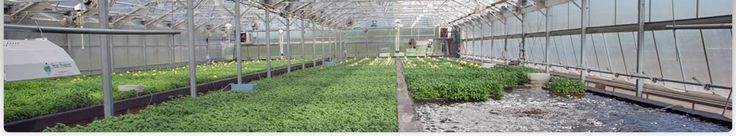 5 Profitable Plants to Grow In Your Greenhouse