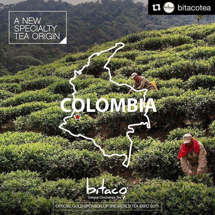 #Repost @bitacotea (@get_repost)  We are the only tea plantation of Colombia. Located in the region of biogeographic Choco which extends from Panama going through Colombia to the north coast of Peru characterized by its high level of rainfall and biodiversity.  Somos la única plantación de té en Colombia. Estamos localizados en la región biográfica del Chocó la cual va desde Panamá pasa a través de Colombia y llega a las costas del norte de Perú; la zona se caracteriza por sus altos niveles…