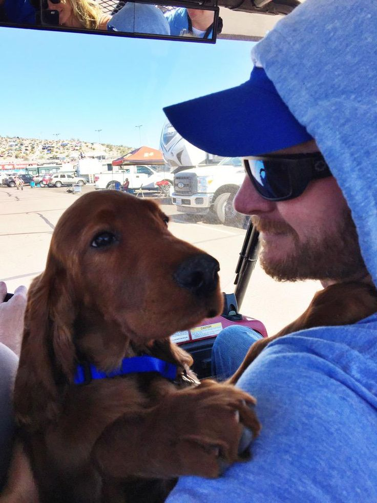 Gus. Avon Farm pup now moves in the fast lane with new dad Dale Earnhardt Jr.