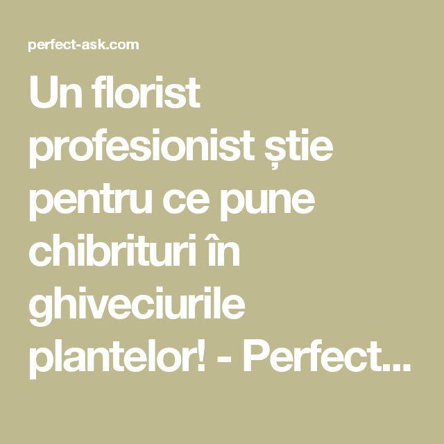 Un florist profesionist știe pentru ce pune chibrituri în ghiveciurile plantelor! - Perfect Ask