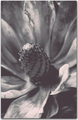 Essence | Botanical, Black and White Collection | George Fivaz Fine Art Photography Gallery | Limited edition print available for purchase  on www.georgefivaz.com