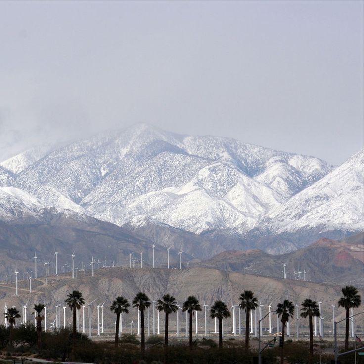 Palm trees and snowy mountains...only in So Cal!!