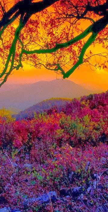 Smoky Mountains  The colors!!  Experience spectacular natural beauty around the world! TravelingUnleashed.com