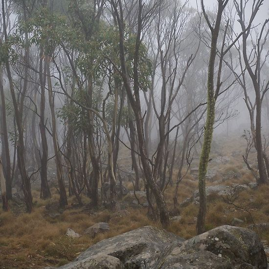Misty Morning, Mount Macedon - Michelle Thompson