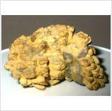 Coprolite fossil herbivorous Dinosaur Poo Australia #1