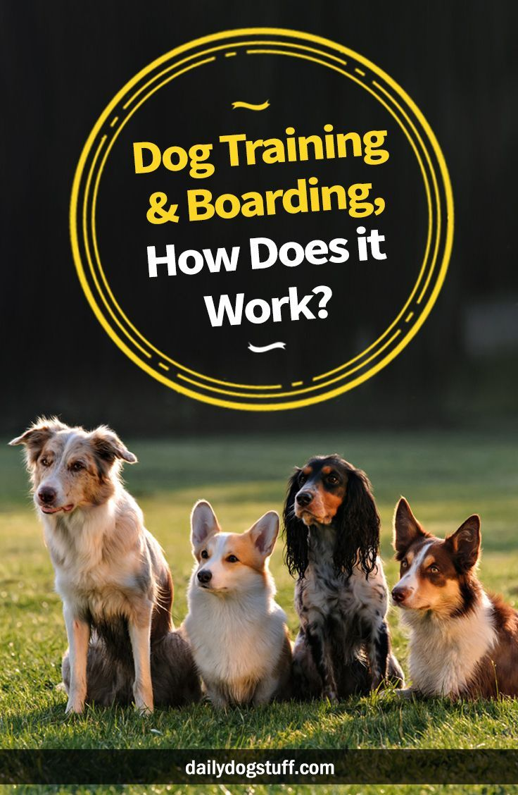 Dog Training Boarding How Does It Work Training Your Dog