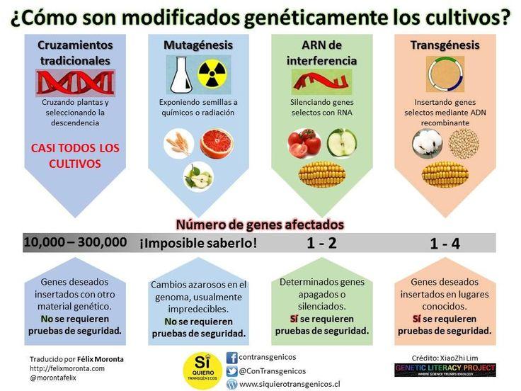 Esta infografía presenta las cuatro principales formas en que los cultivos han sido modificados genéticamente por los seres humanos: cruzamientos, mutagénesis, ARN de interferencia y la transgénesis. http://goo.gl/7llF47