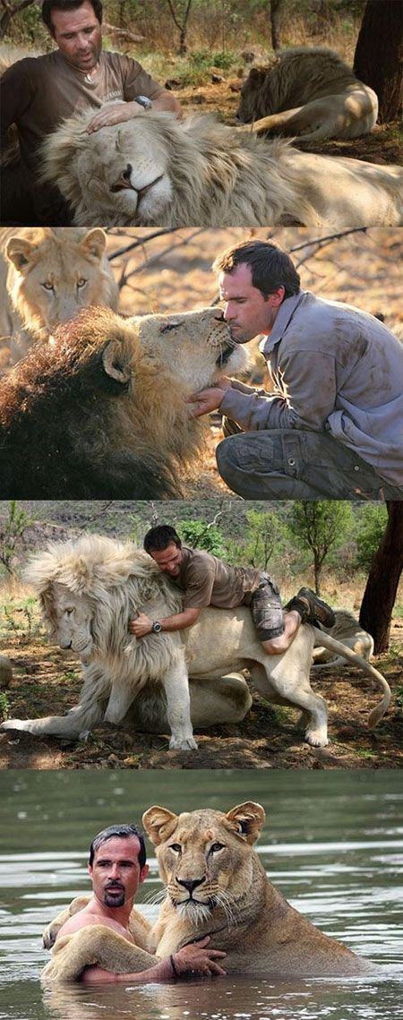The Lion Whisperer - Kevin Richardson with his lions.
