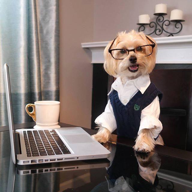 Razones por las que adoptar un perro tras la jubilación