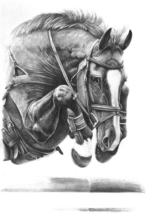 Horse jumping drawings