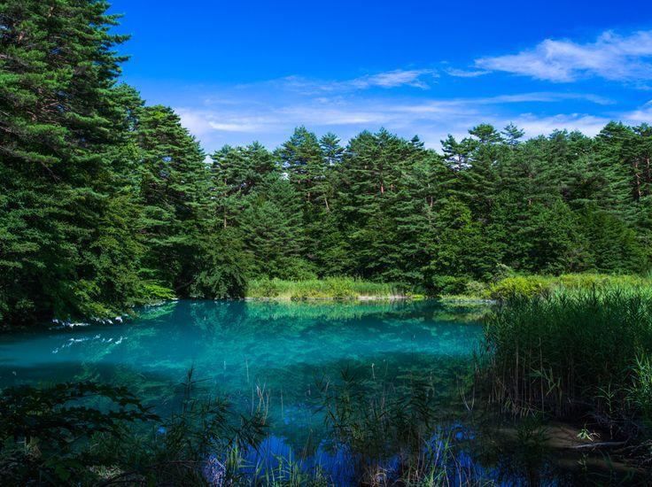 青沼(福島県北塩原村桧原)※裏磐梯の五色沼の一つ。