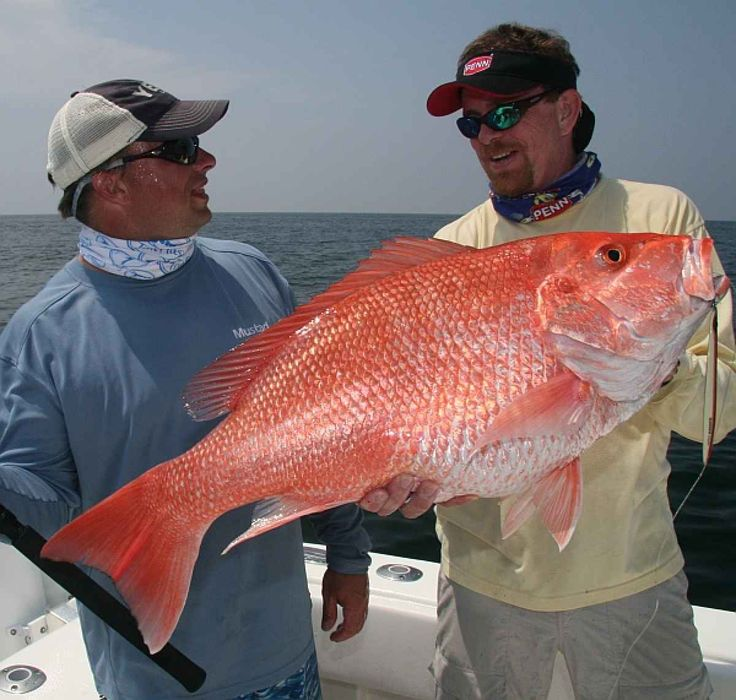 Lutjanus campechanus northern red snapper atlantic for Red snapper fishing