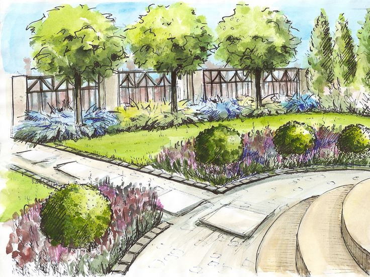 garden design with arcing lines of lawn matching the curved steps and planting beds and contrasting - Garden Design Drawing