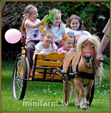 minifarm - HUNGARY Veresegyház Tel.: 30/415-2959