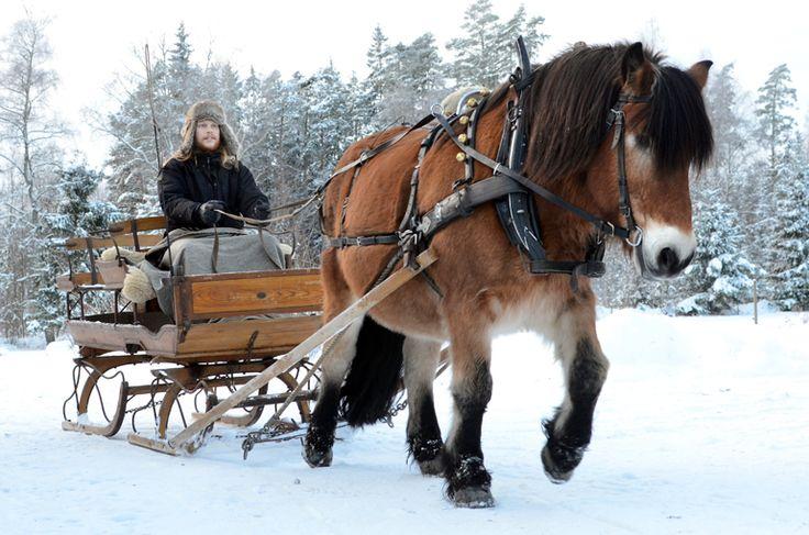 Släde. Slädtur med nordsvensk brukshäst. Vinter. Foto. Häst. Photography. North Swedish Draft Horse. Sleigh ride. Winter. Photo by Swedish photographer Maria Lindberg