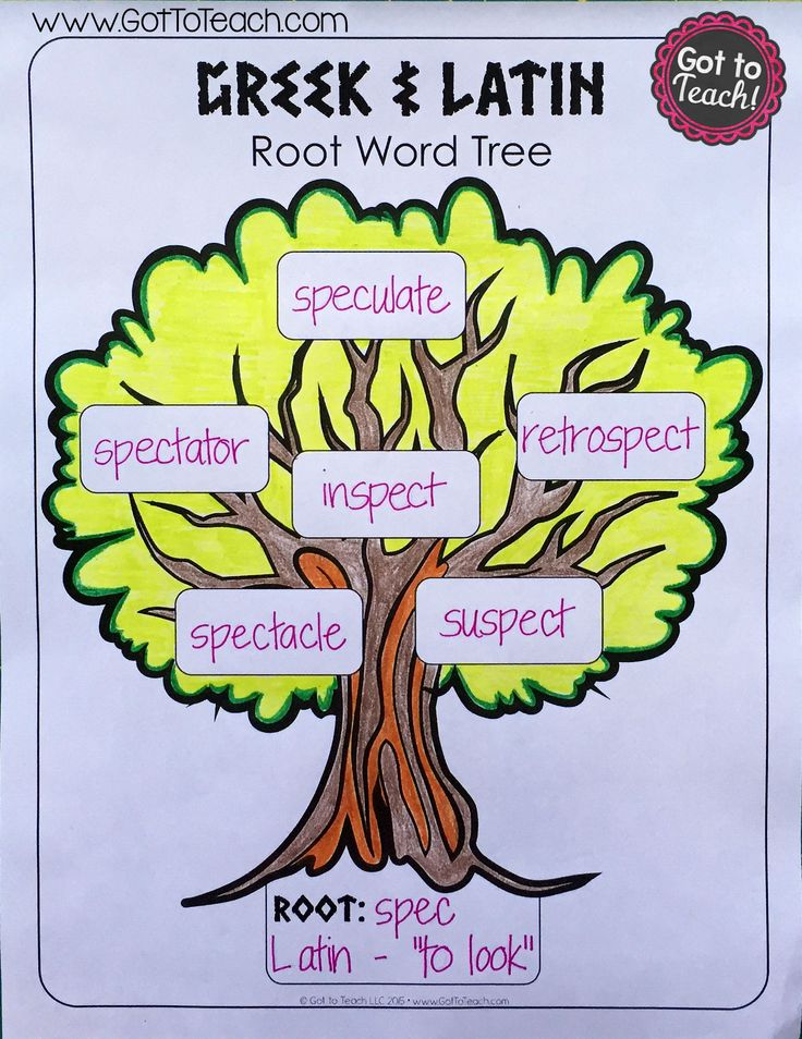 Trans root meaning-2286