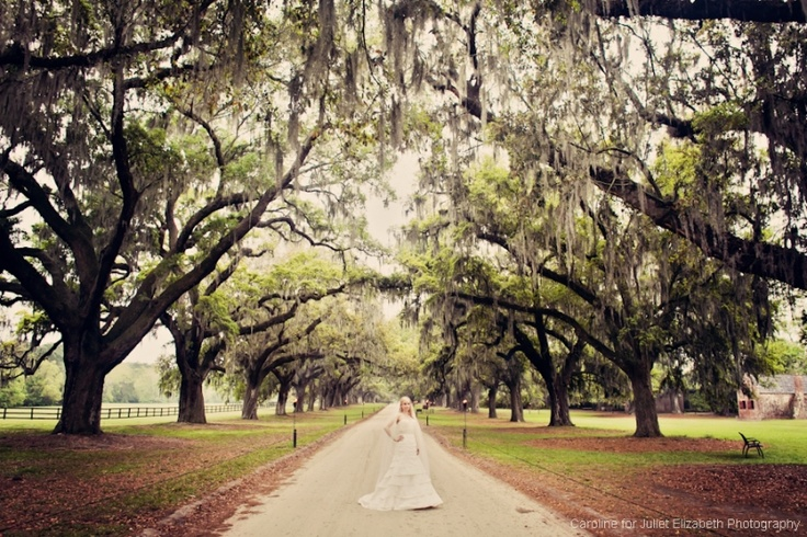 109 best charleston wedding venues images on pinterest wedding high drama at boone hall plantation in charleston south carolina junglespirit Images