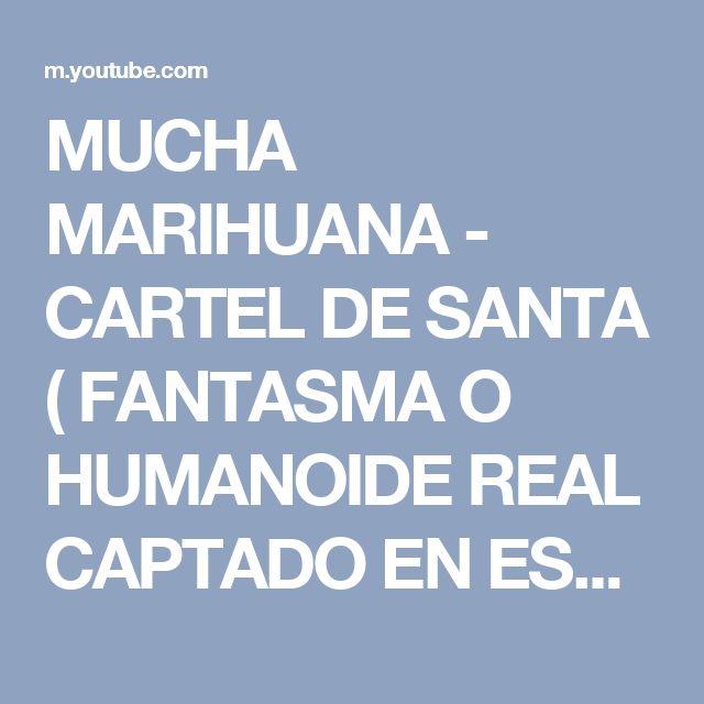MUCHA MARIHUANA - CARTEL DE SANTA ( FANTASMA O HUMANOIDE REAL CAPTADO EN ESTE VIDEO ) #FANTASMAS - YouTube