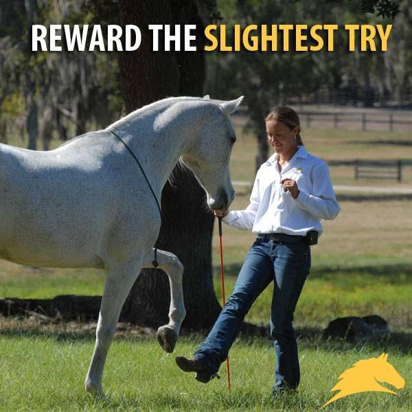 """Reward the slightest try."" - #PatParelli"