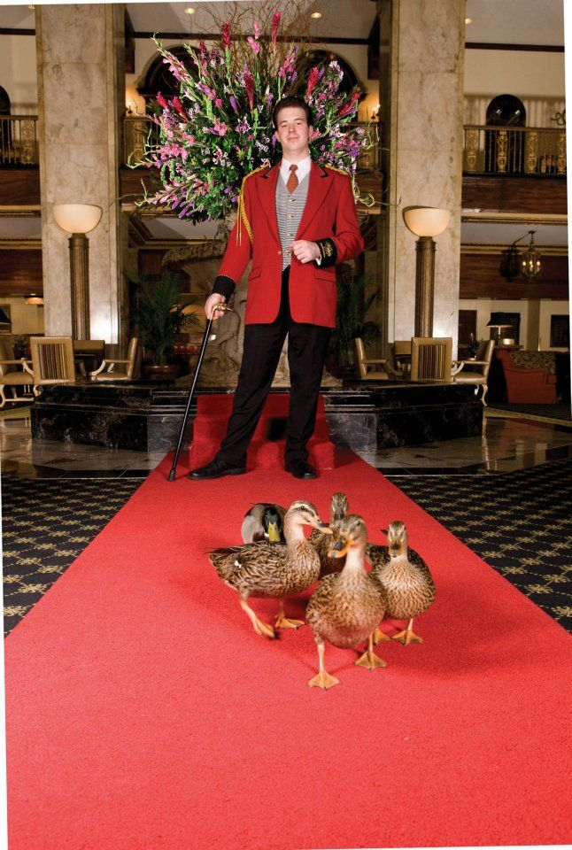 The Ducks In The Peabody Hotel, Memphis, TN - I've got to see this!  Also in Little Rock and Orlando