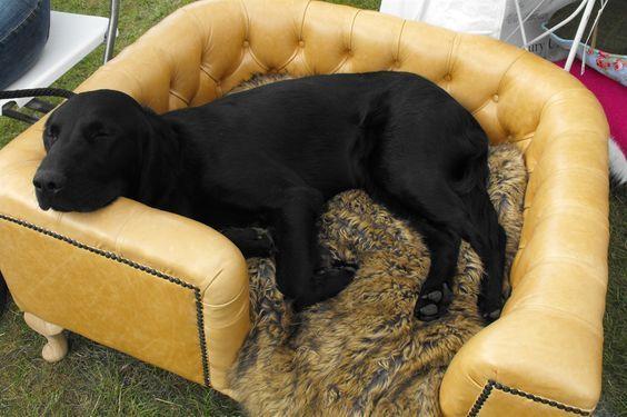 Best 25 Large Dog Beds Ideas On Pinterest Large Pet