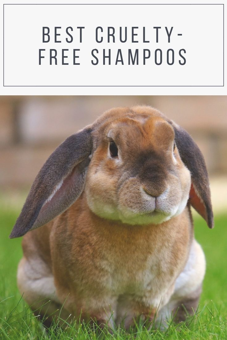 Best Cruelty Free Hair Products In The Uk With Images Pet Rabbit Dog Advice Pet Bunny