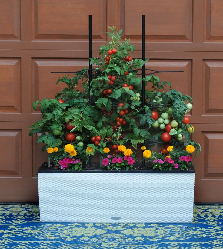 49 Best Images About Herbs Amp Veggies In Container Gardens
