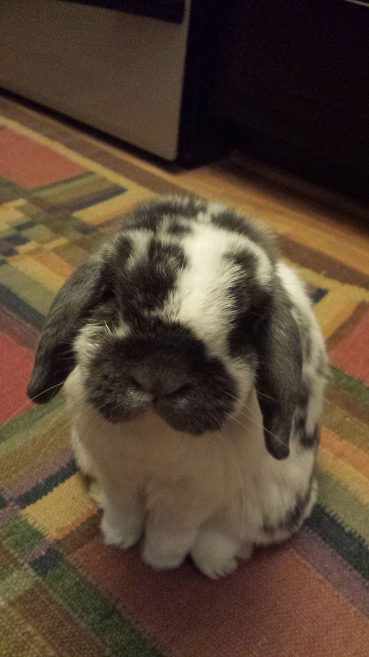 Aww! Look at that cute bunny face! <3