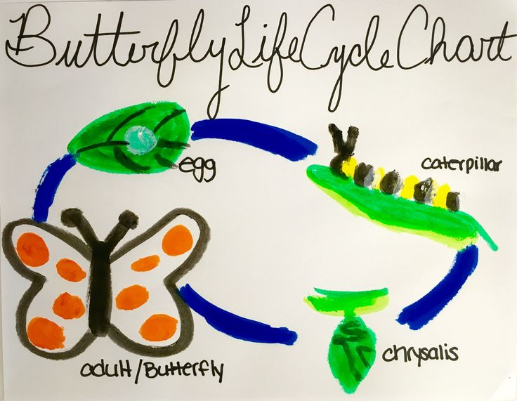 Doing a unit on Life Cycles with your children or students? Creating a Butterfly Life Cycle Chart with Kwik Stix is the perfect craft. The children can enjoy painting and you do not have to worry about the mess! To add some Mess Free Creativity to your classroom go to www.thepencilgrip.com