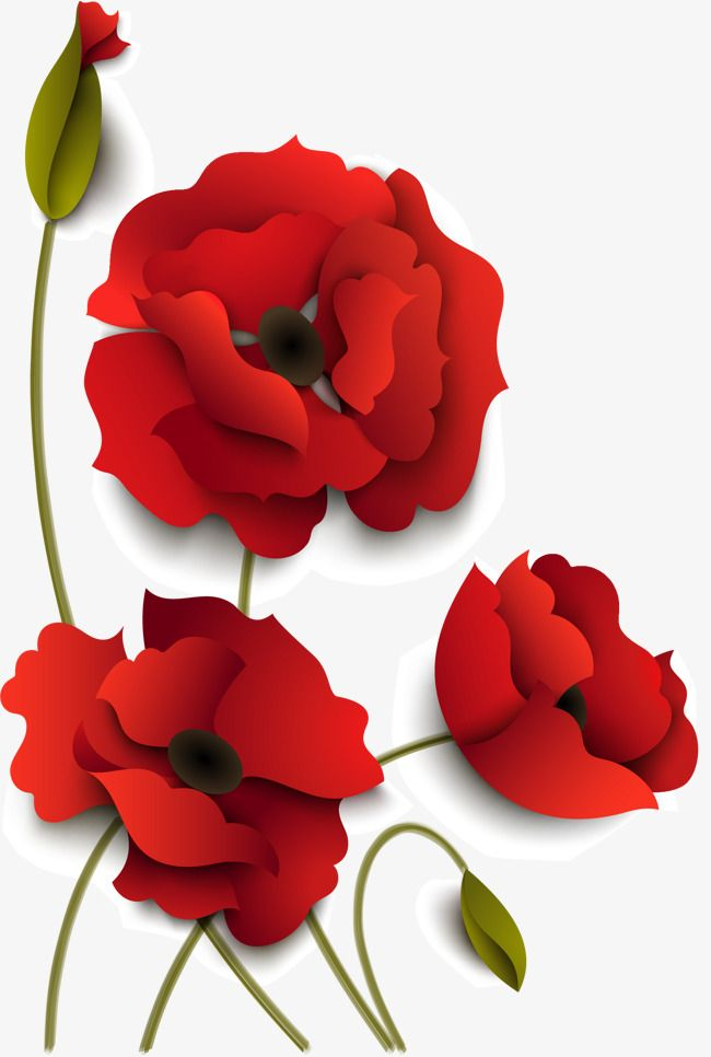 Hand Painted Red Flowers Hand Vector Hand Petal Png And Vector With Transparent Background For Free Download Red Flowers Vector Flowers Flowers