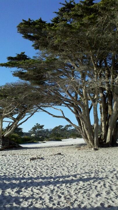 Carmel Beach, the cypress trees, the sand, beautiful! I am addicted.