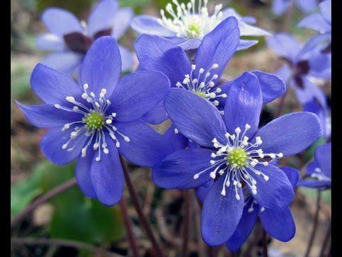 Подснежник голубой! 4 ЧАСТЬ, Весенние цветы своими руками!