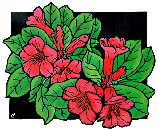 Native Rhododendron Design - Limited Edition Handpainted Linocuts by Lynette Weir