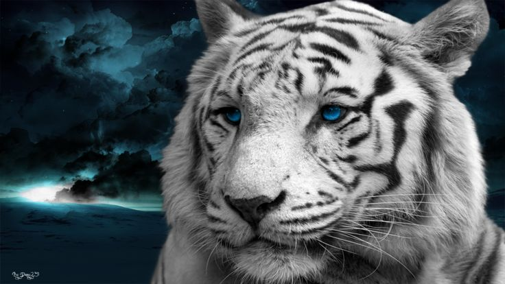 Just a simple white tiger