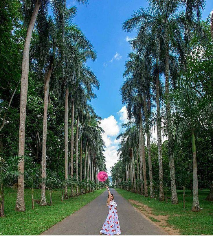 Feeling Happy @Royal botnical garden Kandy - Sri Lanka.  Explore Sri Lanka with Us. . 94 777854022 (Mobile-WhatsApp-Viber-Line-Imo) . Email - info@srilankatravelandtourism.com.  http://ift.tt/2sCJdFy  Photo by - @donzsy  #russia #tajikistan #armenia #germany  #arab #uzbekistan #lithuania  #srilankatravel #ukraine #argentina #colombia #traintours #ella #english #lexumbourg #belarus #amenia #kazakhstan #uae #british #travels #srilanka #triptosrilanka #visitsrilanka #exploresrilanka…
